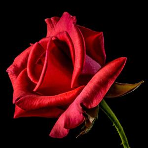 Celebrating Valentine's Day in Latin America