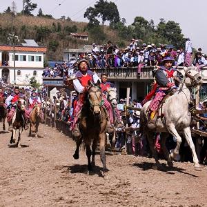 drunken-horse-racing