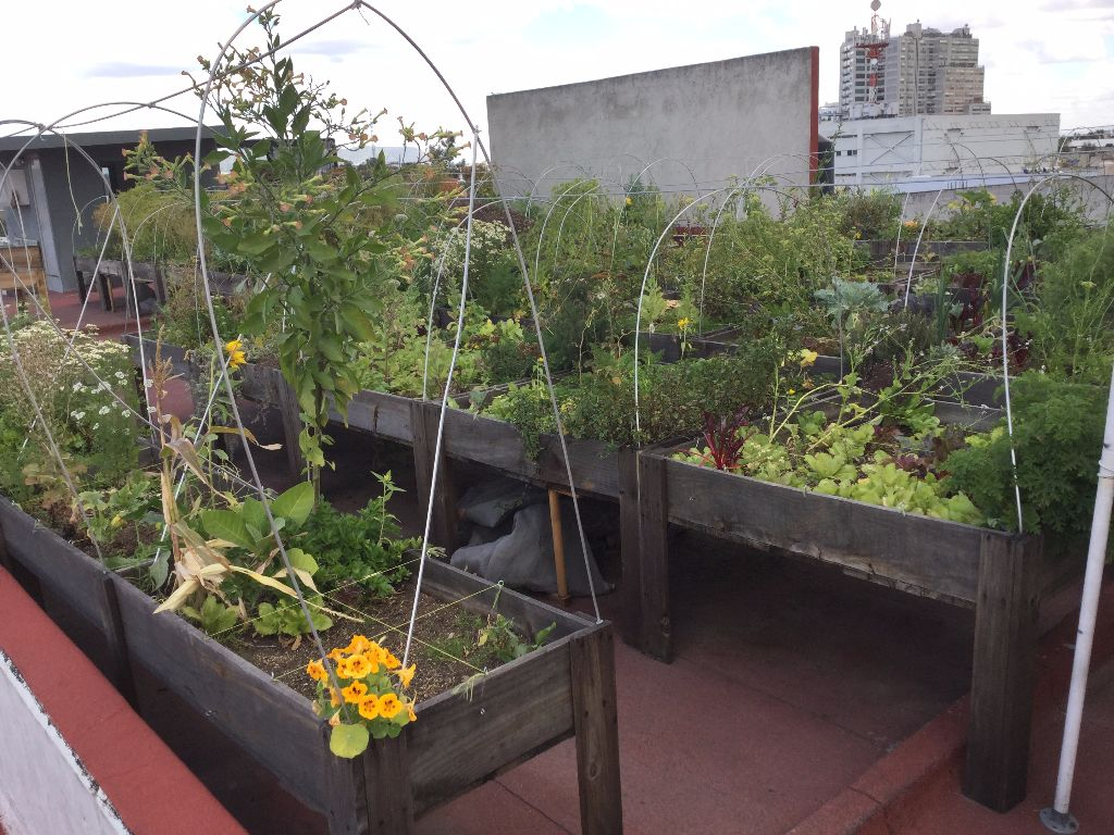 startup mexico rooftop garden