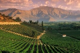 chilean wine