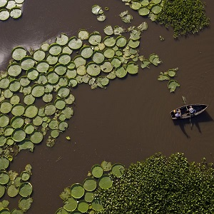 giant lily pads paraguay